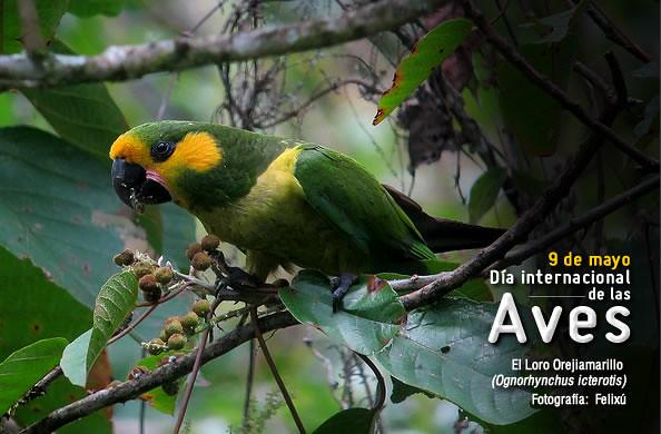 9 de Mayo: Día Internacional de las Aves