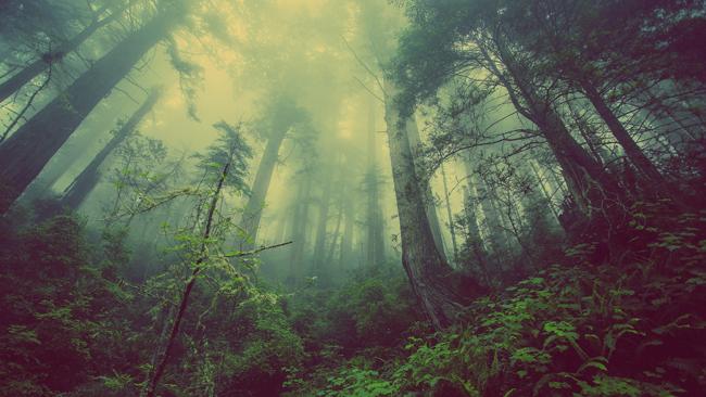 18 de octubre: Día Mundial de Protección de la Naturaleza